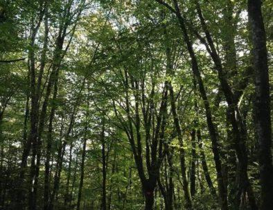 balade forêt